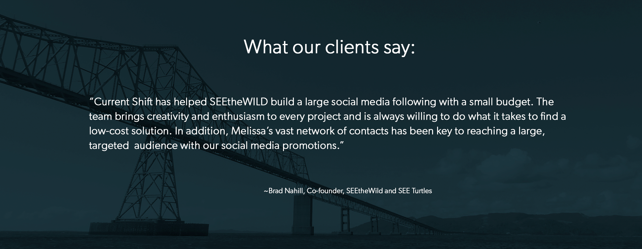 what_our_clients_say_see_turtles